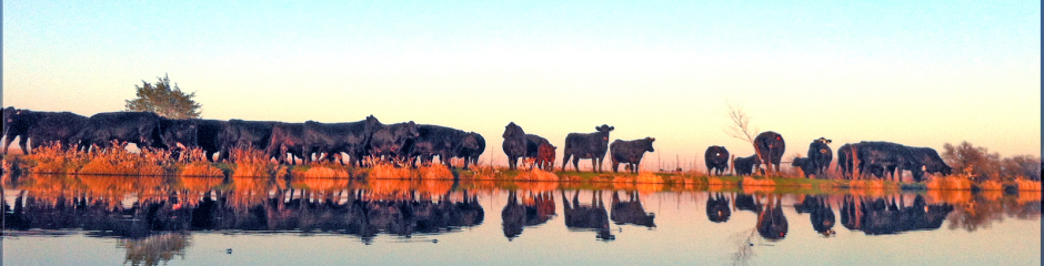 Corsicana Cattle Company